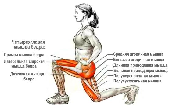 Какие мышцы работают в упражнении выпады