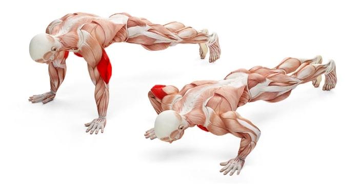 Какие мышцы работают при отжиманиях от пола