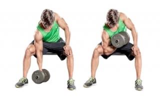 Упражнение концентрированное сгибание руки с гантелью на бицепс