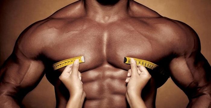 Что придает мышцам форму
